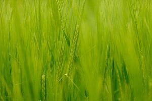 Groen van