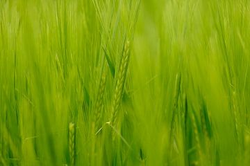 Green sur Arjen Roos