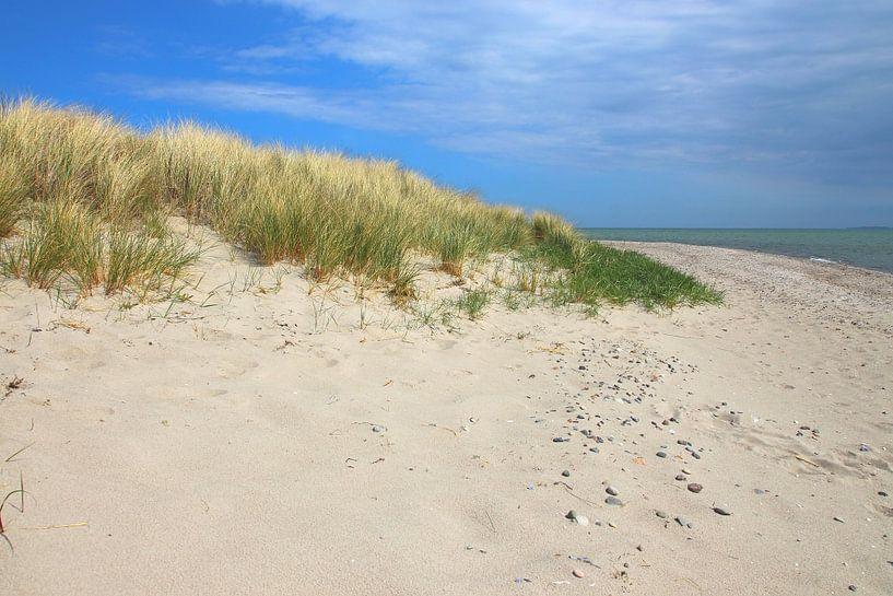 Dünenlandschaft im Aptil von Ostsee Bilder