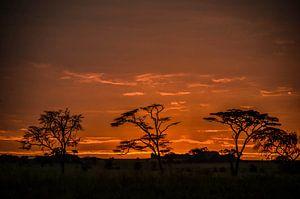 Zonsopgang Serengeti Nationaal Park Tanzania van olaf groeneweg