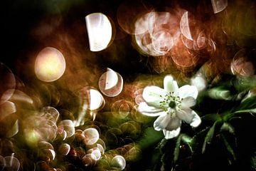 Frühling von Udo Wanninger limitiete Auflage