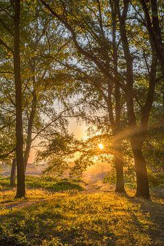 Waldweg während des Sonnenaufgangs auf der Brunssummerheide von John van de Gazelle