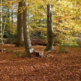 bos in herfstkleur met bladeren in goudkleur van Compuinfoto .