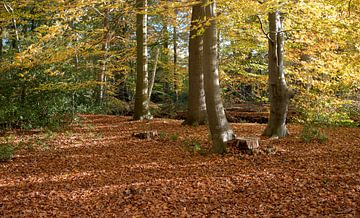 Wald in Herbstfarbe mit goldenen Blättern von Compuinfoto .