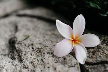 Blume von Marianne Bal