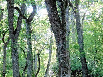 green forest van Mika Iwakiri