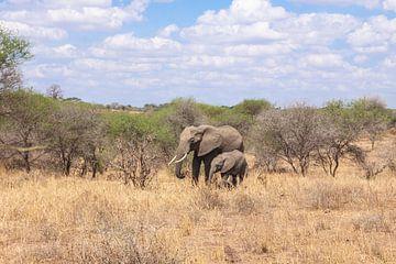 Elefant und Kleiner im Gras von Mickéle Godderis