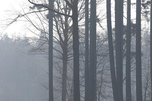 Mystieke bomen van Geert Naessens