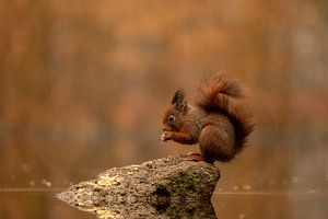 Eichhörnchen 2 von Marjan Slaats