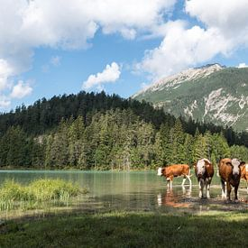 """""""Austrian wildlife""""! von Robert Kok"""