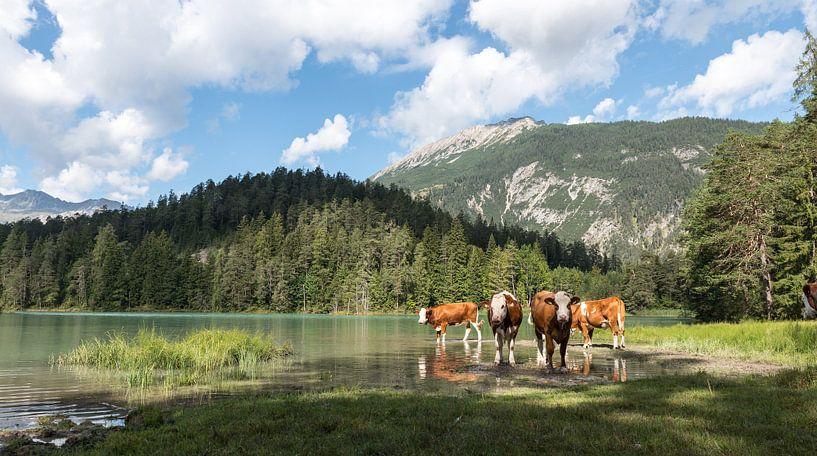"""""""Austrian wildlife""""! van Robert Kok"""