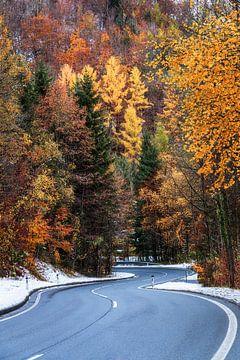 """Waldlandschaft """"Kurvig"""" von Coen Weesjes"""