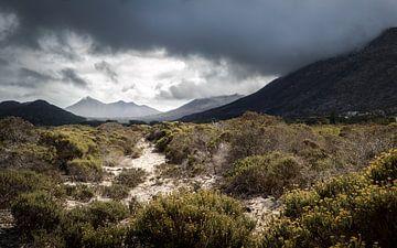 Stormy Bush von Thomas Froemmel