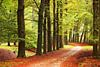 The autumn path in the forest.. van LHJB Photography thumbnail