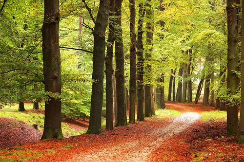 The autumn path in the forest..