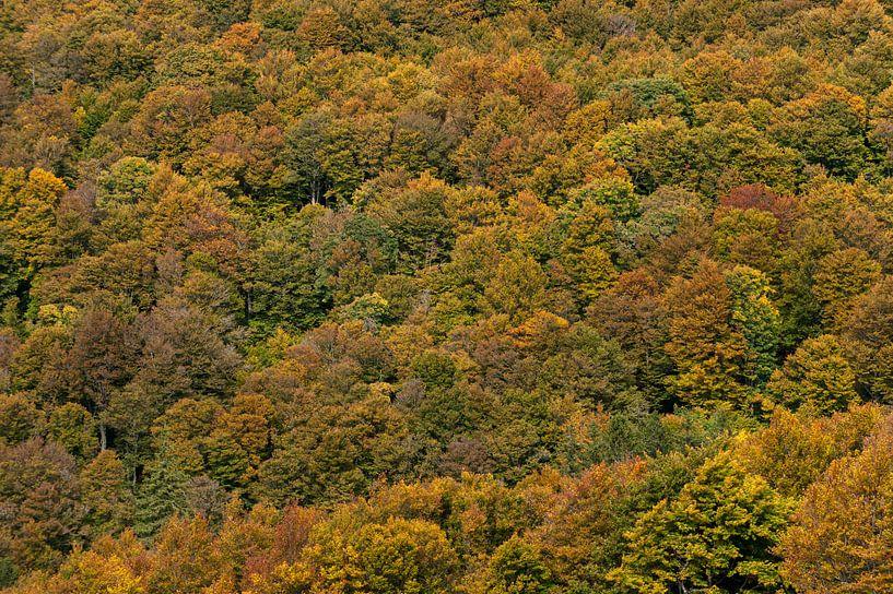 Herfstkleuren van Wim Slootweg