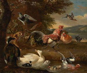 Melchior d' Hondecoeter, Kippen en eenden