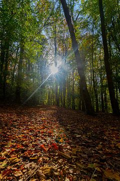 Sonnenstrahlen scheinen durch die Bäume im Wald auf bunte Herbstblätter von Kim Willems