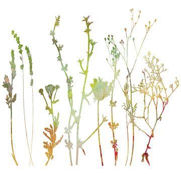 Zomer in het weiland. Wilde bloemen en planten. Botanische illustratie van Dina Dankers