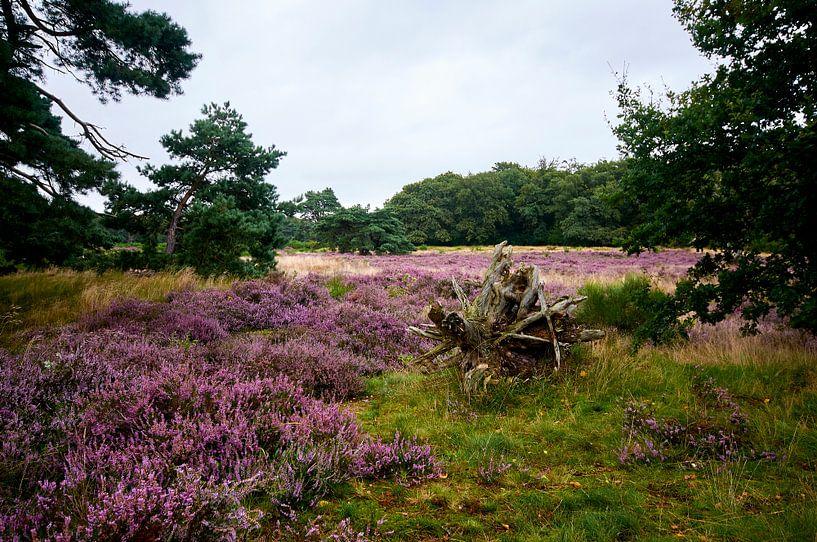 Heide in Bloei van Erik Reijnders
