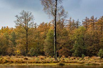 Waldrand im Herbst von Rolf Linnemeijer