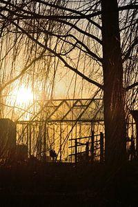 De zonsondergang achter de kas van Sjoerd Murk