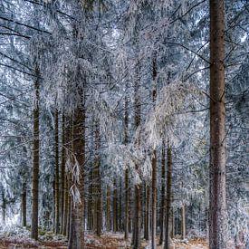 Duik in het zwarte woud van Konstantinos Lagos