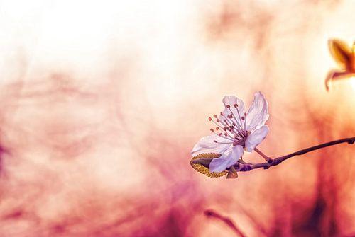 Feuriger Frühling in der Flamme von Arja Schrijver Fotografie