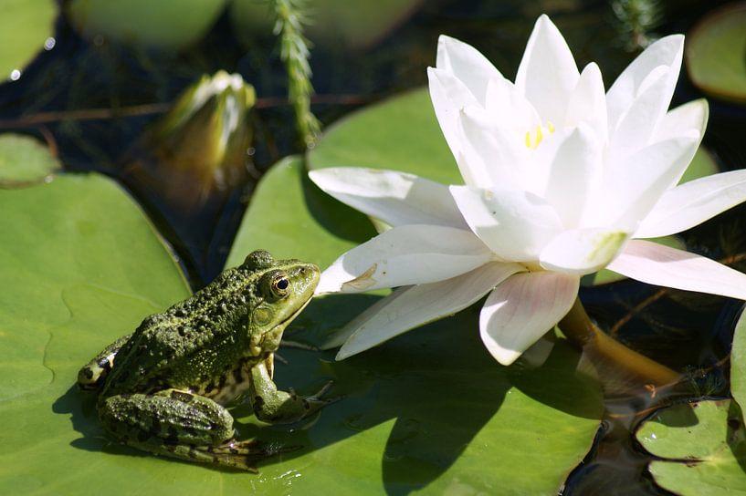 Frog sunbathing in the Lilly Pond van Jeroen van Deel