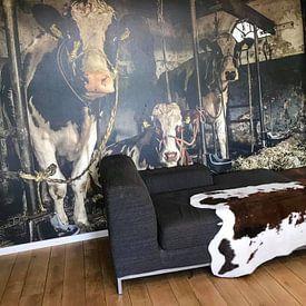 Kundenfoto: Kuhe im alten Kuhstal von Inge Jansen