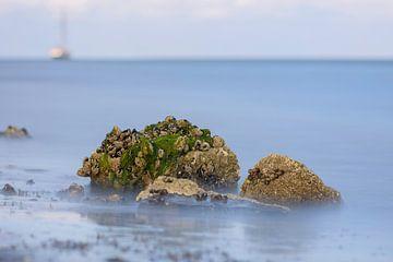 Zeewier groen 6 von Albert Wester Terschelling Photography