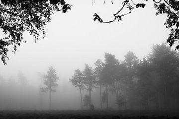 schwarz und weiß Bäume in den Nebel von Tania Perneel