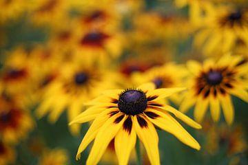 Gele bloemen van MSP Canvas