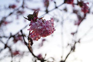 Eenzame bloem van angela de baat