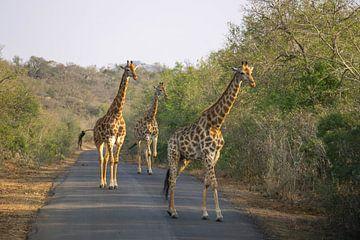 Giraffen op de weg van Reis Genie