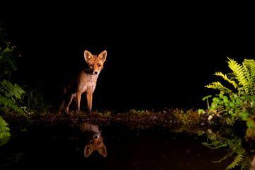 Vos in de nacht bij water van Andius Teijgeler