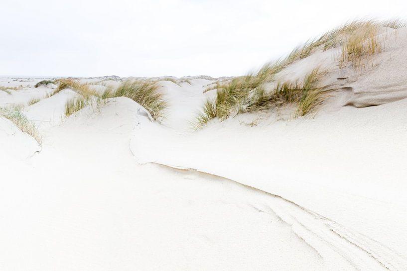 Duinen van Texel van Judith Borremans