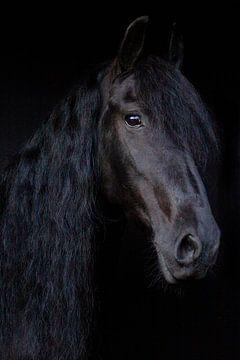 Fries Paard van By Foto Joukje