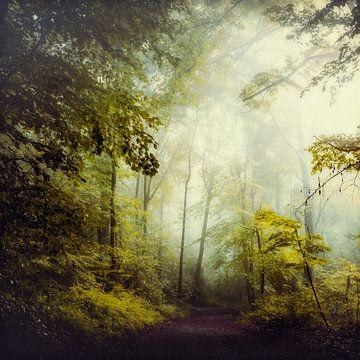 Summer Forest - Glorious Woods van