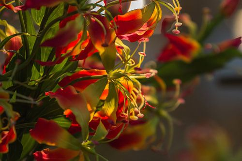 Bloemen van
