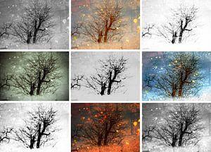 Negen bomen