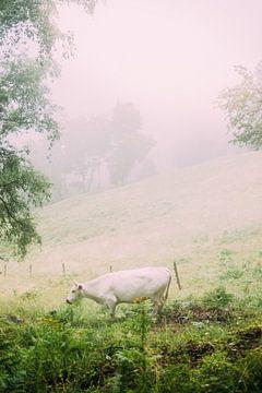 Cow in Fog sur Patrycja Polechonska