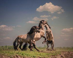 Dansende paarden