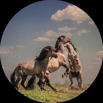 Dansende paarden van Henri Ton
