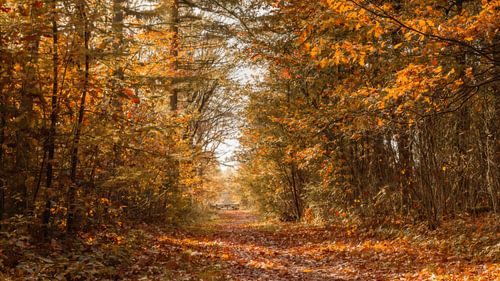 Herfst bospad met hek
