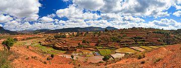 Madagaskar panorama akkerlandschap von Dennis van de Water