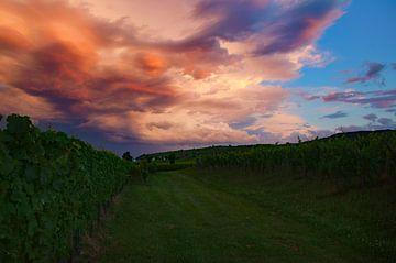 Wijnvelden in de Elzas, Frankrijk wolkenlucht tijdens zonsondergang van Discover Dutch Nature
