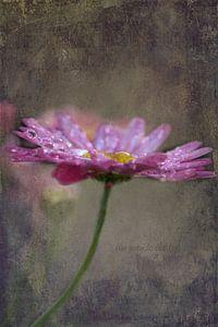 Margriet in de regen van Carla van Zomeren