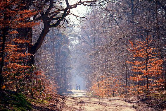 spring in the forest...  van Els Fonteine