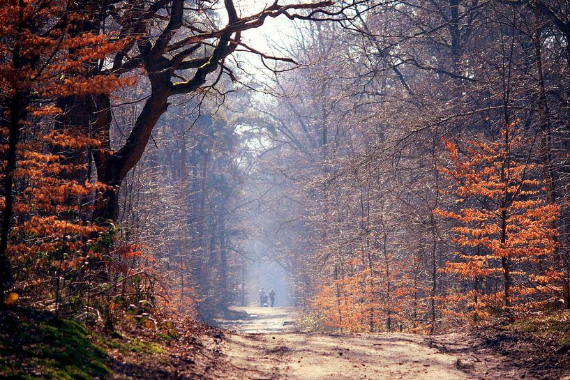 spring in the forest...  von Els Fonteine